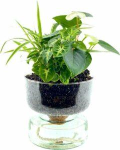 LOFE-Soil Jewel-Cirkle White, luchtzuiverende planten arrangement in glas met waterbuffer