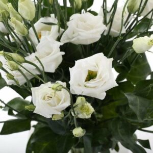 Lisianthus bloem