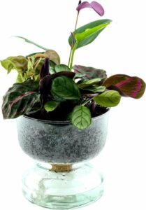 Luchtzuiverende kamerplant met water onderin LOFE-Soil Jewel-Cirkle Purple