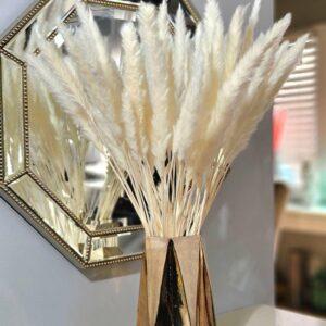 Pampas Pluimen Wit – Natuurlijke Tint - 15 stuks – Pampas Gras – 70 cm – Droogbloemen – Cortaderia – Droogbloemen Boeket – Pampasgras - Decoratie
